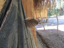 mariposa ayahuasca ojo de luna