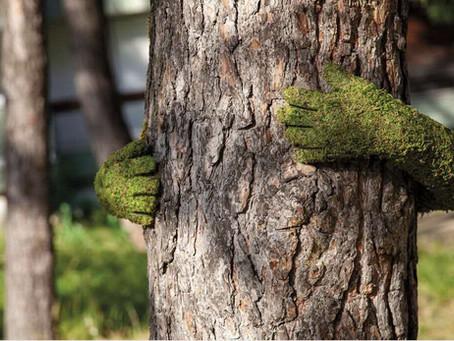 La Sylvothérapie... Soin des arbres..