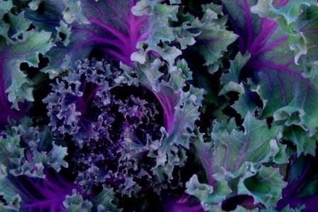 Winter Kale & Delicata Salad