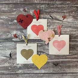 Plantable Cards - Little Bloomers