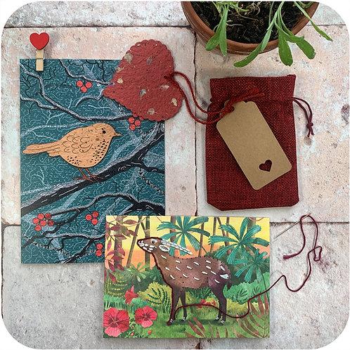 Romantic Plant & Craft Gift Set