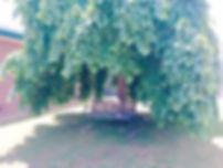 outdoor area.jpg