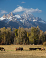 Fall View of the Tetons