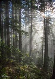 Forest Light on a New Year's Hike