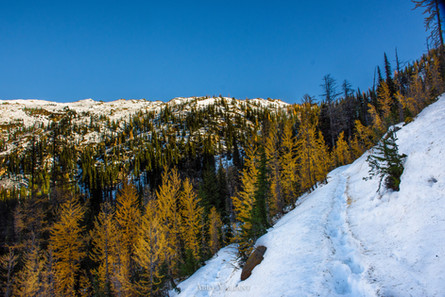 Hiking Among Larches to Cutthroat Pass, North Cascades
