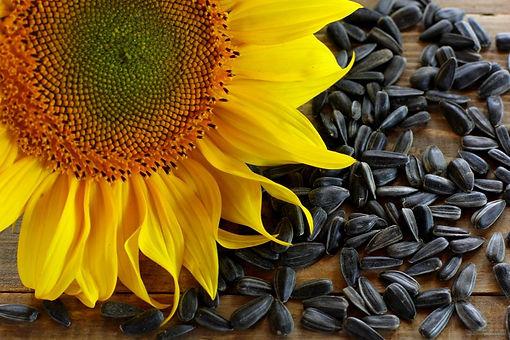 black-oil-sunflower-seeds-1024x683.jpg