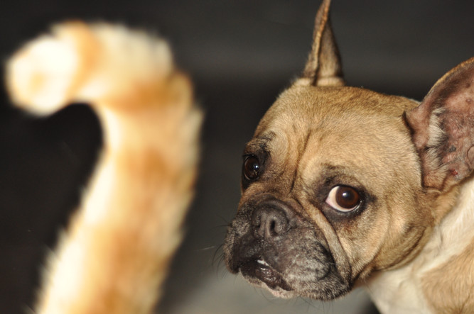 photographe chien nantes