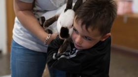 Accompagner des enfants par la médiation animale