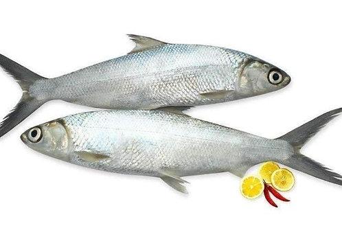Frozen Milk Fish 2.5 Kg