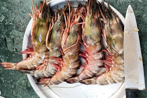 Shrimps Tiger Head On Shell On White U 5 (Jumbo) 2 Kg