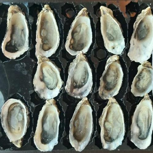 Frozen Oysters ( 16 Pcs )
