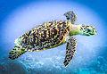 sea-turtle 2.jpg