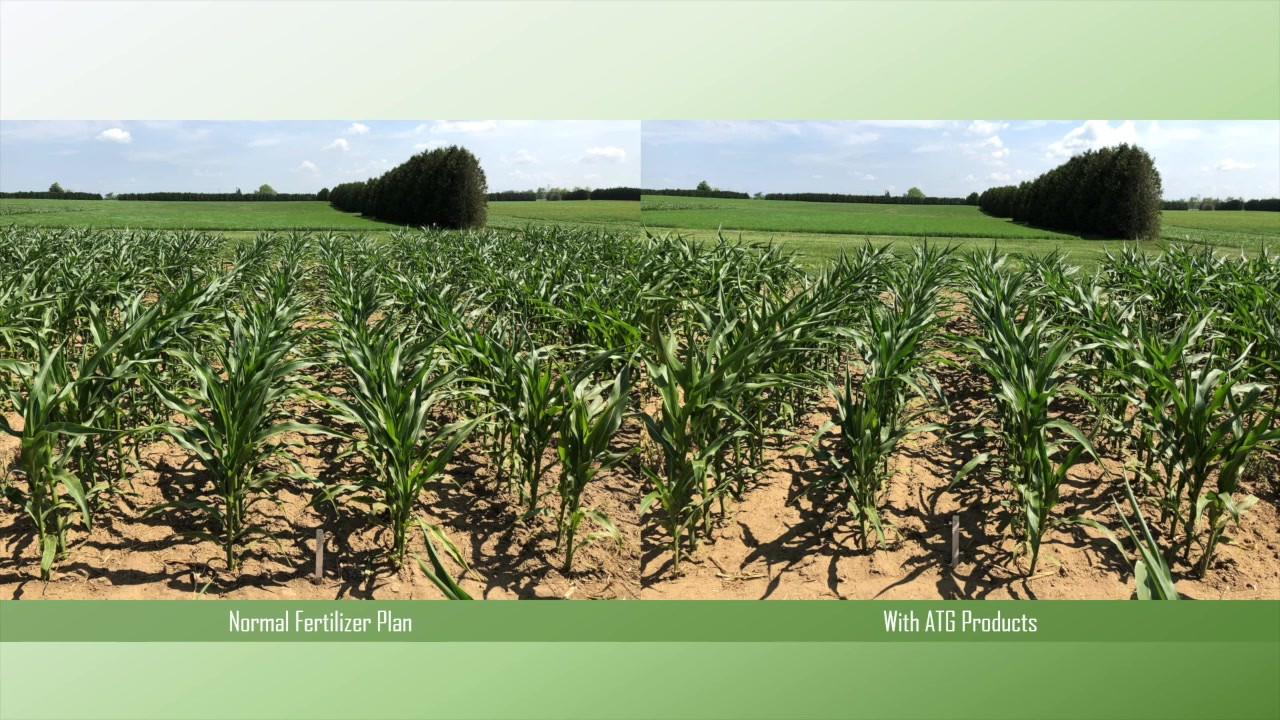 ATG Corn & Soybeam