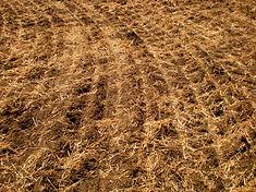 Soil 1.JPG