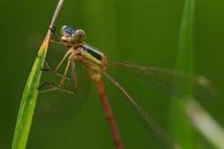 La biodiversité en portrait
