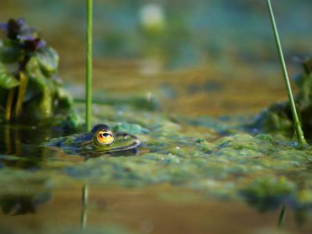 La biodiversité commune