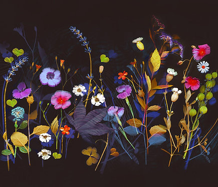 Wildflower Collection 1
