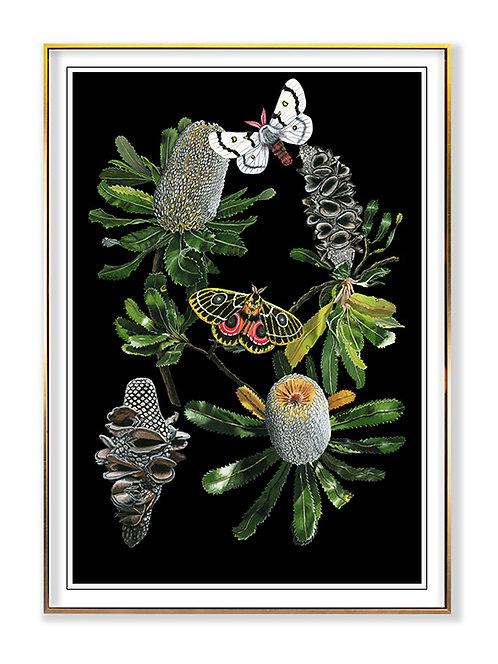 Botany Banksia Chart