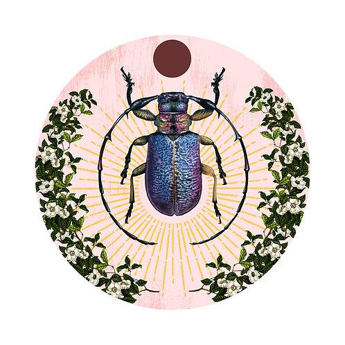 Beetle Plate 2