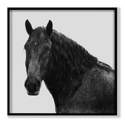 Horse Riggs Farm 5
