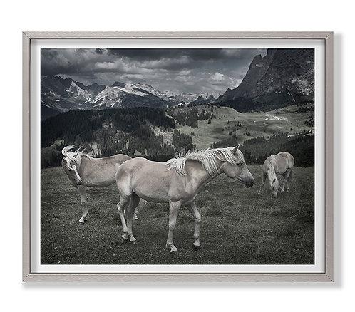 Horses in Europe
