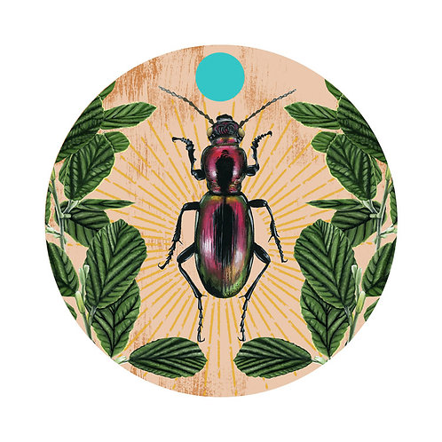 Beetle Plate 3