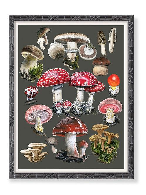 Mushroom Chart