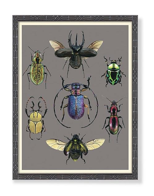 Entomology Beetles Chart