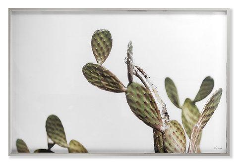 AZ Botanical 37