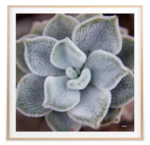 Fuzzy Succulent
