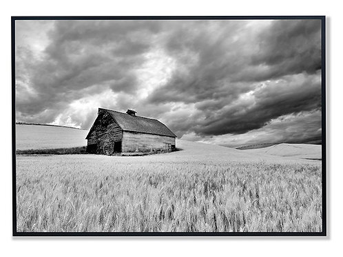 Barn in Wheat Field with Approaching Storm