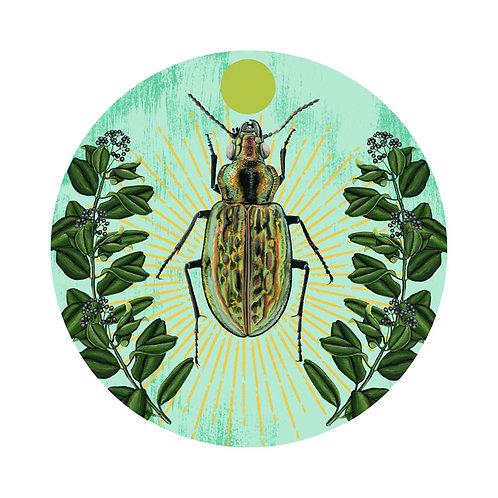 Beetle Plate 1