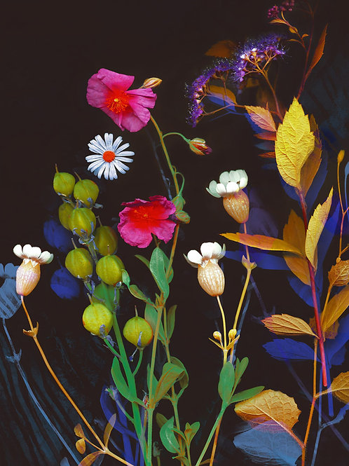 Wildflower Collection 2