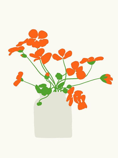 Nasturtium In Vase