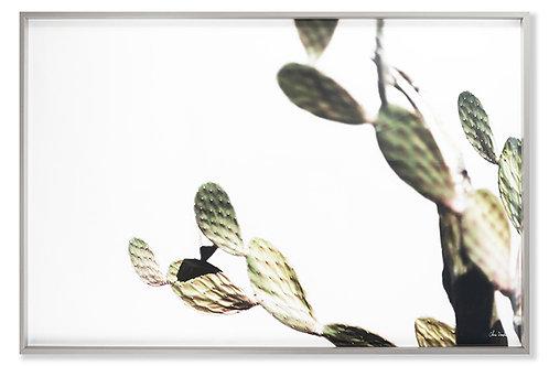 AZ Botanical 38