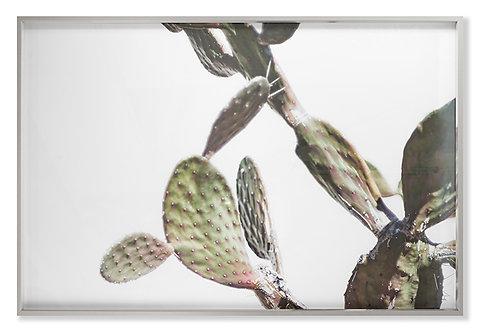 AZ Botanical 40