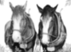 Working Horses. Shire Horse. Cart Horse. Tommy and Albert. Draft Horse. Heavy Horse