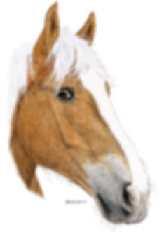 Horse. Horse portrait. Topaz