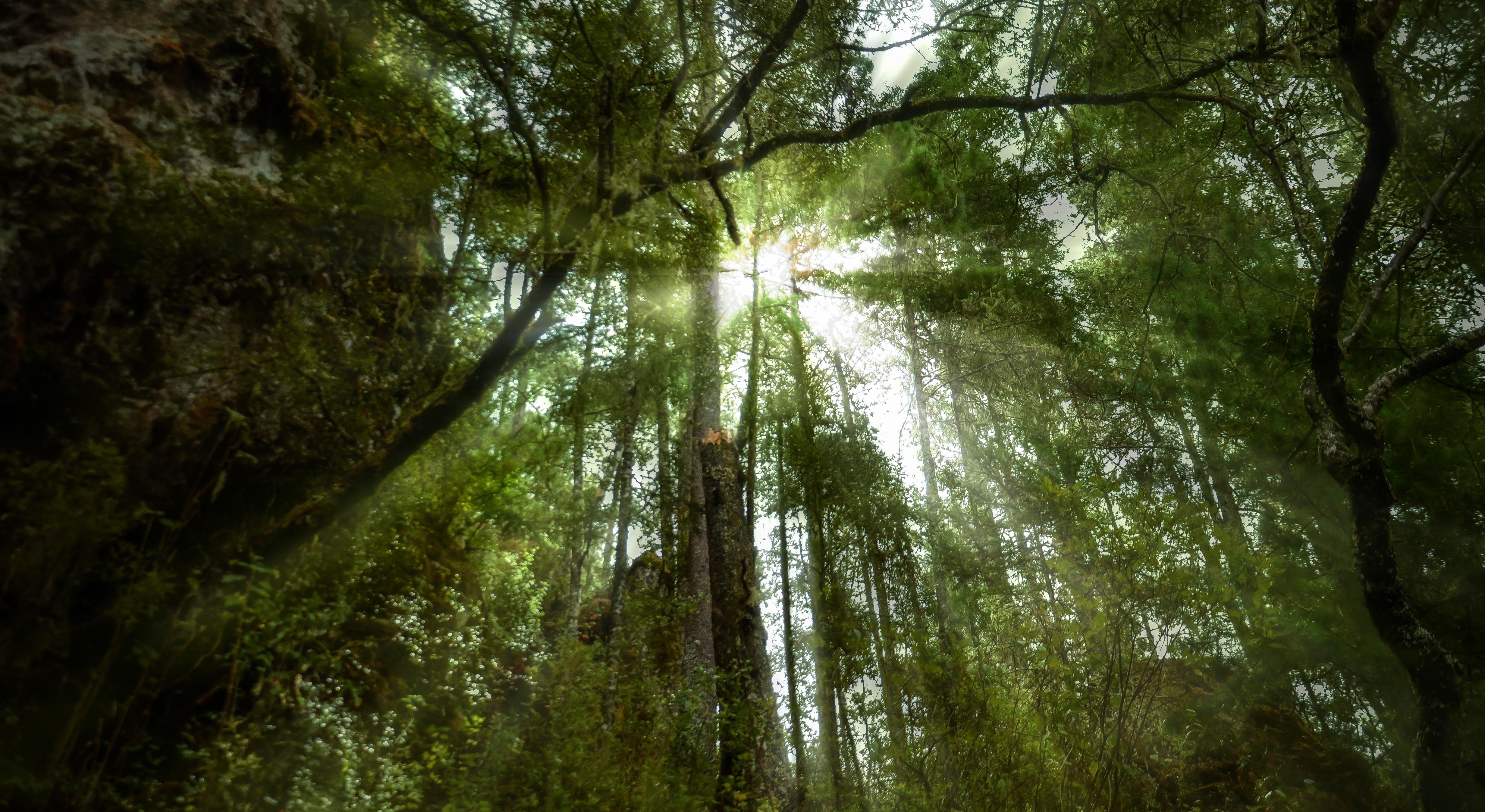 Bosques serranos
