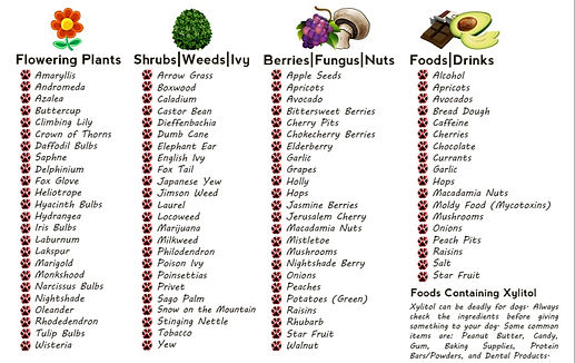 Poisonous-Plants-Foods-for-Pets_edited.j