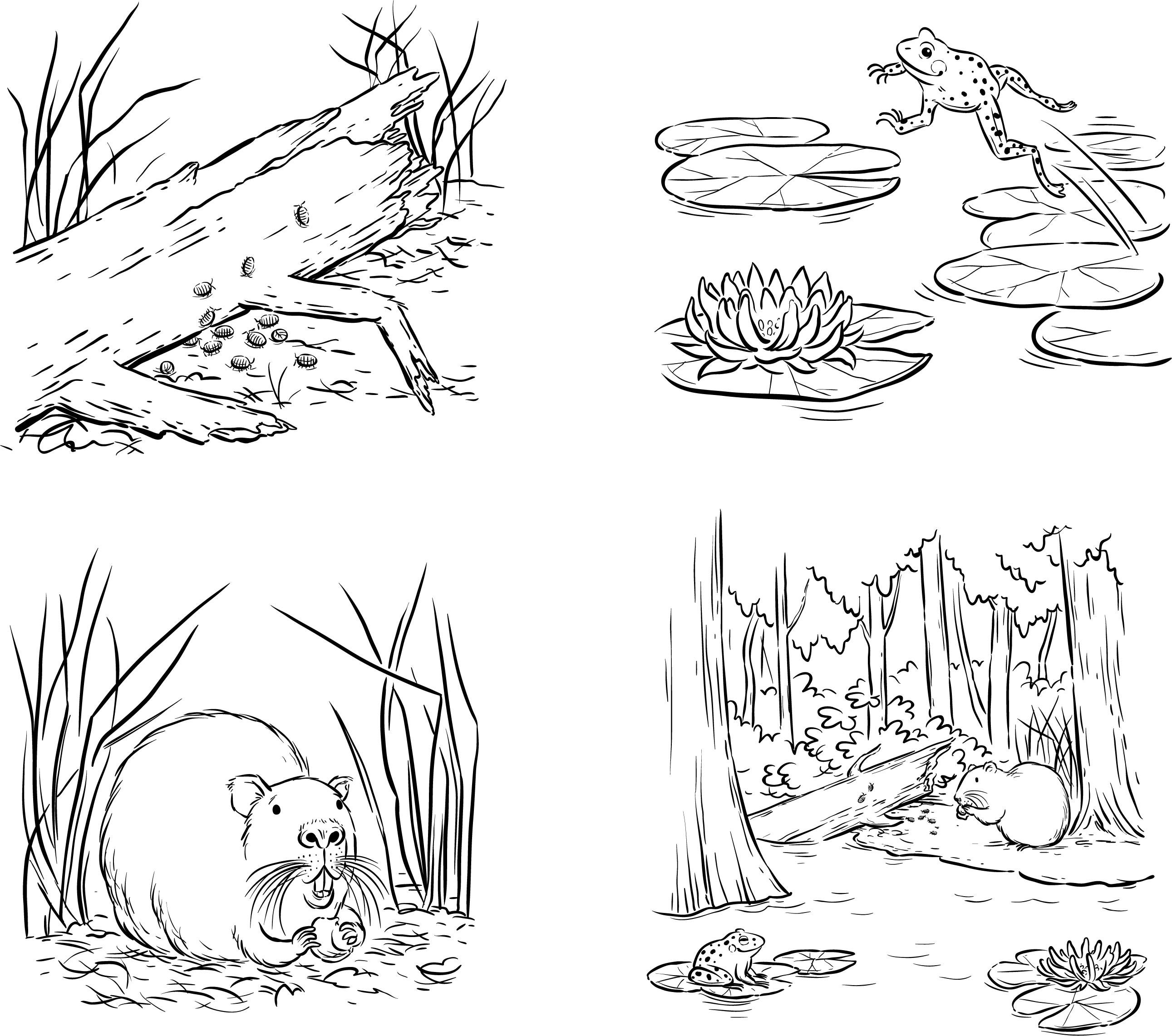 Swamp Spots
