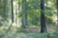 Vintersbølle_skovbegravelsesplads_a.jpg