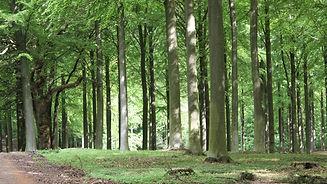 Skovbrug_1.jpg