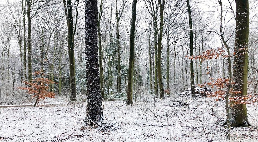 Skovbegravelsesplads_vinter_sne.jpg