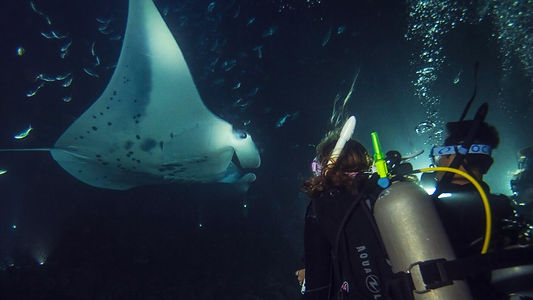 Dive Company Wien | Padi Nachttauchen