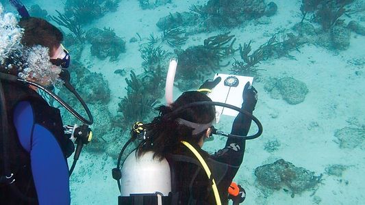 Dive Company Wien | Padi Navigation