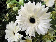 Florals by MJ's Place: Carbondale Florists - Florists in Carbondale IL - Flower delivery in Carbondale IL