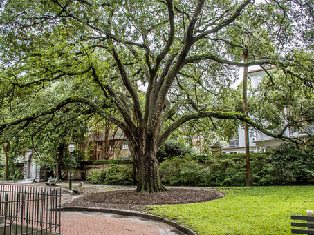 Nestled in the Heart of Charleston: Washington Square