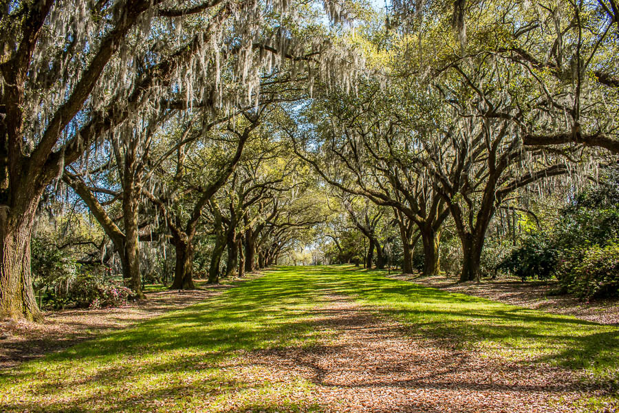 avenue of oaks charles towne landing