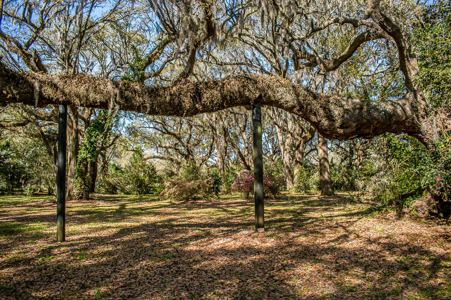 supported large oak tree branch charleston sc